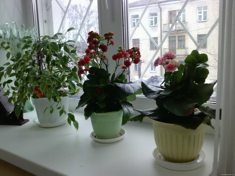 Как правильно подобрать растения для дома!